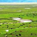 毛垭草原,川藏线最美风景没有之一