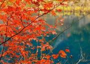 今年这里的最后一抹秋色,川西的秋天